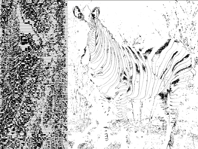 zebraonFire