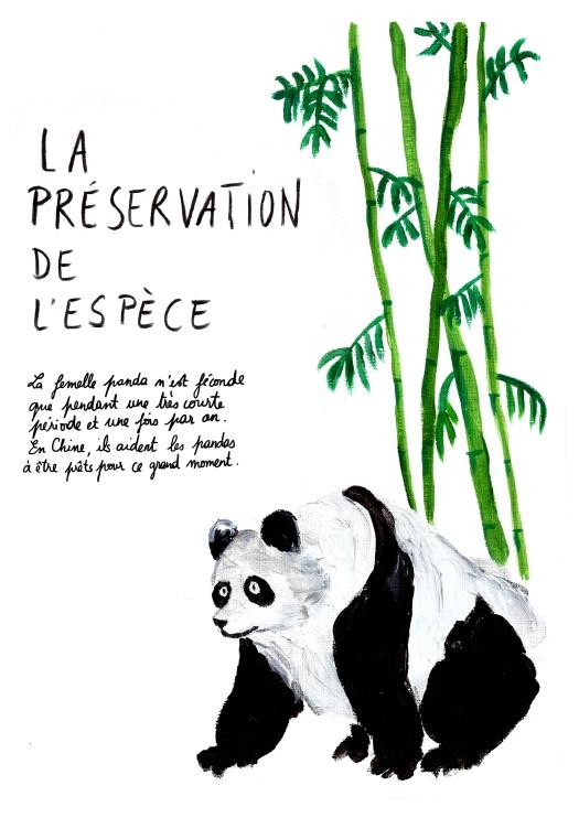 Pandas1Yaya.jpg